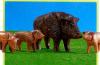 Playmobil - 7265 - Wildschweinfamilie